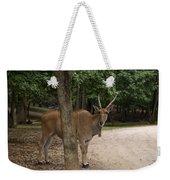 Antelope Behind A Tree Weekender Tote Bag