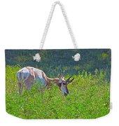 Antelope Near Wildlife Loop Road In Custer State Park-south Dakota- Weekender Tote Bag