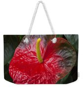 Anthurium Flamingo Flower Beauty Queen Fine Art Photography Print Weekender Tote Bag