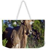 Aoudad Sheep  Weekender Tote Bag