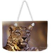 Arabian Leopard Panthera Pardus 1 Weekender Tote Bag