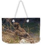 Arabian Leopard Panthera Pardus Cubs Weekender Tote Bag