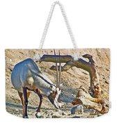 Arabian Oryx In Living Desert In Palm Desert-california Weekender Tote Bag