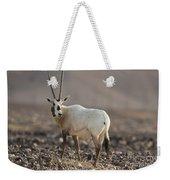 Arabian Oryx Oryx Leucoryx Weekender Tote Bag