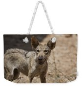 Arabian Wolf Canis Lupus Arabs Weekender Tote Bag