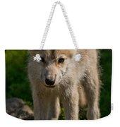 Arctic Wolf Pictures 345 Weekender Tote Bag