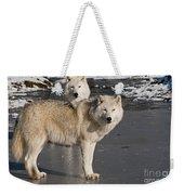 Arctic Wolf Pictures 812 Weekender Tote Bag