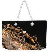 Army Ant Carrying Cricket La Selva Weekender Tote Bag