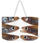Arrangement Of Small Fish Smelt Weekender Tote Bag