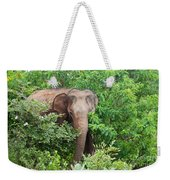 Asian Elephant  Elephas Maximus Weekender Tote Bag