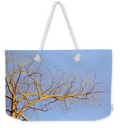 Aspen In The  Autumn Sun Weekender Tote Bag