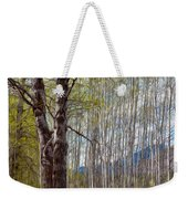 Aspen Trees Proudly Standing Weekender Tote Bag by Omaste Witkowski