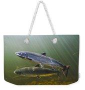 Atlantic Salmon Adults Migrate From Weekender Tote Bag