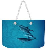 Atlantic Spotted Dolphin Adults Weekender Tote Bag