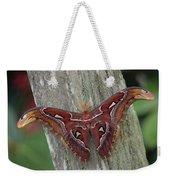 Atlas Moth Portrait Asia Weekender Tote Bag