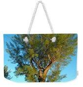 Australian Pine At Sundown Weekender Tote Bag