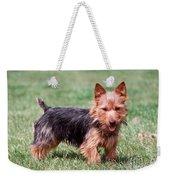 Australian Terrier Dog Weekender Tote Bag