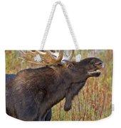 Autumn Bull Moose II Weekender Tote Bag