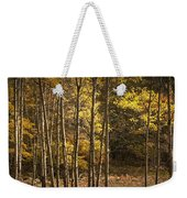 Autumn Forest Scene With Birches In West Michigan Weekender Tote Bag
