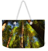 Autumn Sunlight Cast On Majestic Green Oregon Old Growth Forest  Weekender Tote Bag
