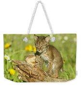 Baby Bobcat At Play Weekender Tote Bag