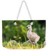 Baby Duckling In The Morning Light Weekender Tote Bag