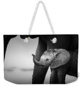Baby Elephant Next To Cow  Weekender Tote Bag