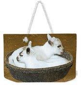 Baby Goats Lying In Food Pan Weekender Tote Bag