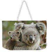 Baby Koala With Mom Weekender Tote Bag