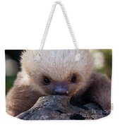 Baby Sloth 2 Weekender Tote Bag by Heiko Koehrer-Wagner
