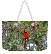 Backyard Cardinal In Tree Weekender Tote Bag