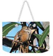 Bahama Woodstar Hummingbird Weekender Tote Bag