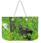 Bald Eagle In A Tree  Weekender Tote Bag