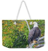 Bald Eagle In Fall Colors Animals Weekender Tote Bag