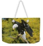 Bald Eagle In Perch Wildlife Rescue Weekender Tote Bag