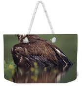 Bald Eagle Juvenile British Columbia Weekender Tote Bag
