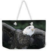 Bald Eagle Landing On Prey Weekender Tote Bag