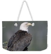 Bald Eagle On Nest With Chick Alaska Weekender Tote Bag by Michael Quinton