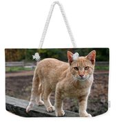 Barn Cat Weekender Tote Bag by Rona Black