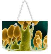 Basidiomycota Sem Weekender Tote Bag by Biophoto Associates