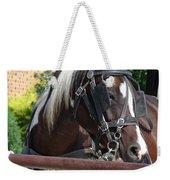 Bay Pinto Amish Buggy Horse Weekender Tote Bag