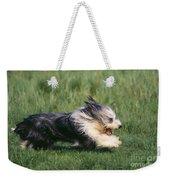 Bearded Collie Dog Weekender Tote Bag