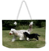 Bearded Collies Playing Weekender Tote Bag by John Daniels