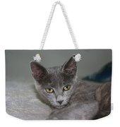 Beautiful Portait Of A Grey Russian Tabby Cat Weekender Tote Bag