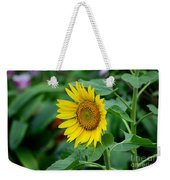 Beautiful Yellow Sunflower In Full Bloom Weekender Tote Bag