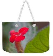 Episcia Flower Weekender Tote Bag