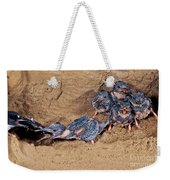 Belted Kingfisher Feeds Young Weekender Tote Bag