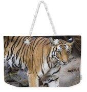 Bengal Tiger And Cubs Bandhavgarh Np Weekender Tote Bag