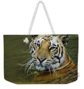 Bengal Tiger In Water Native To India Weekender Tote Bag