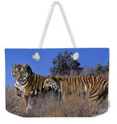 Bengal Tigers On A Grassy Hillside Endangered Species Wildlife Rescue Weekender Tote Bag